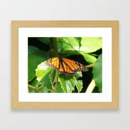 Butterlfy 1 Framed Art Print