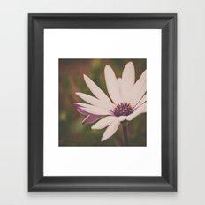 Soft Petals Framed Art Print