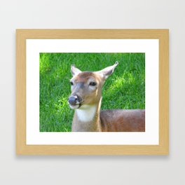 Up Close and Personal with a Beautiful Doe Framed Art Print