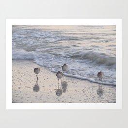 Sandpipers  Art Print