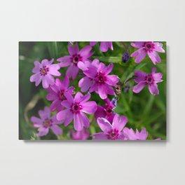 Flowers Izby Garden 6 Metal Print