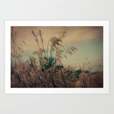 Winter Field Art Print