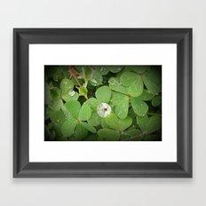 Rain on leaves Framed Art Print
