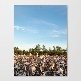 Cotton Field 16 Canvas Print