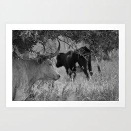 Oklahoma's Wild Longhorn // Black and White Art Print