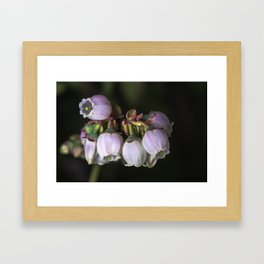 Blueberry Bells Framed Art Print