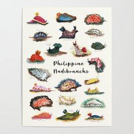 Nudibranchs Poster