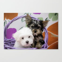 Maltese Puppy and a Yorkshire Terrier Puppy Cuddling in a Purple Basket with Flower Background Canvas Print