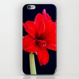 Red Amaryllis iPhone Skin