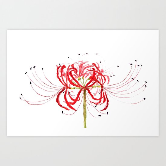 Red spider lily Art Print