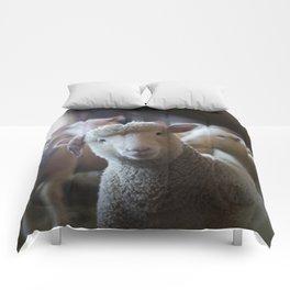 Sheep Looking at Camera Comforters