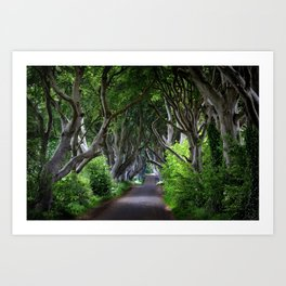 Dark Hedges, Northern Ireland. Art Print