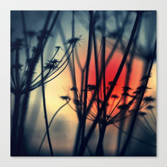 Shapes - dry weeds at sunrise Canvas Print