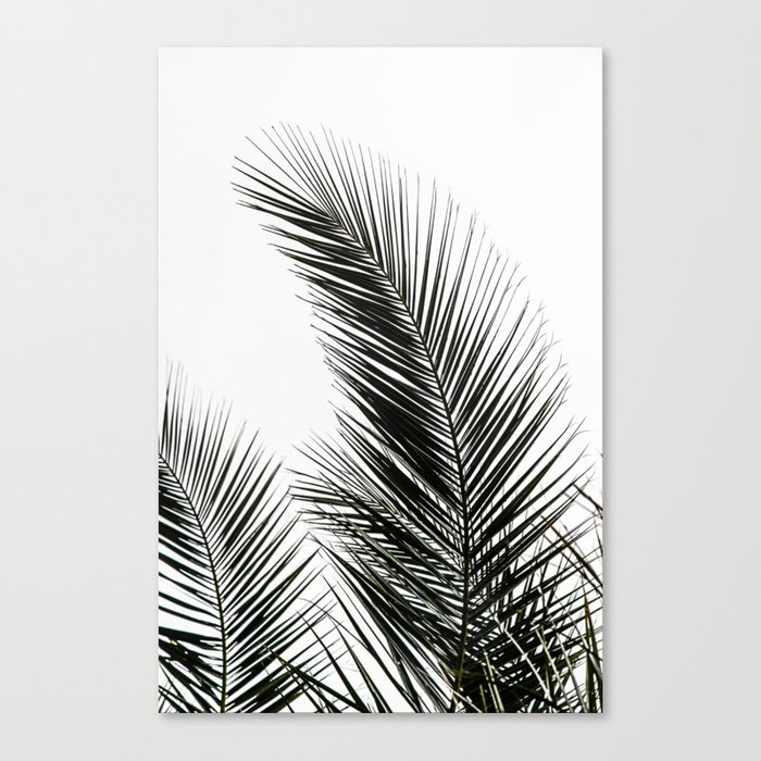 Palm Leaves Leinwanddruck