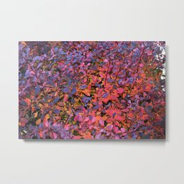 Colorful Fall Leaves Metal Print