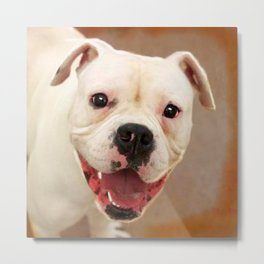 White Boxer Dog Metal Print