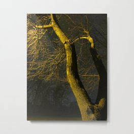 The Noise Of Trees Metal Print