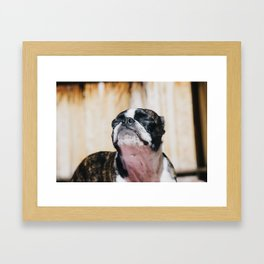 Bruce sunbathing Framed Art Print