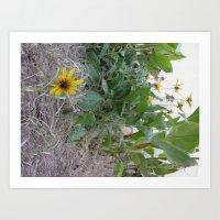 Sunshine Yellow - 2  Art Print