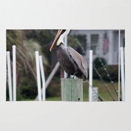 Adult Brown Pelican Rug