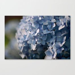 Hydrangea in Blue Canvas Print