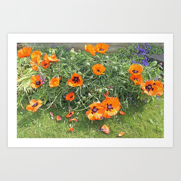 South winds jostle them; poppies in the garden Art Print