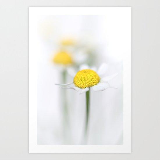 Matricaria (German chamomile) (2) Art Print