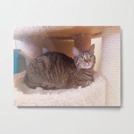 Tabby Kity Cat Rey Metal Print