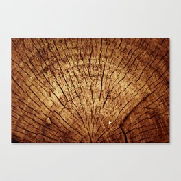 Burnt sun tree Canvas Print