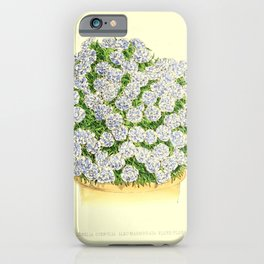 Flower lobelia coerulia albo-marmorata flore pleno12 iPhone Case