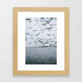 A flock of seagulls; Winter choas  Framed Art Print