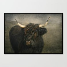 The Black Cow Canvas Print