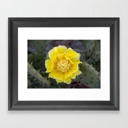 Yellow Cactus Flower 2 Framed Art Print