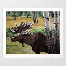 Cedar Meadows Moose Art Print