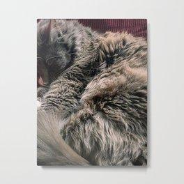 Moses the cat Metal Print