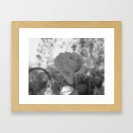 Dad's Last Rose Framed Art Print