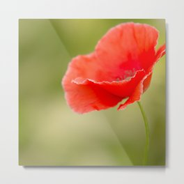 Miss you so much Red Poppy #decor #society6 Metal Print