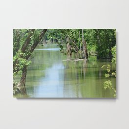 Backwoods Swamp Metal Print