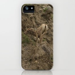 Baby Mountain Goat in Yellowstone National Park, WY iPhone Case