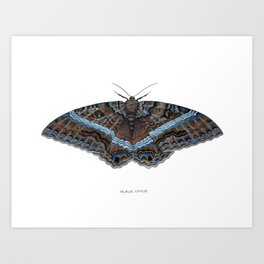 Black Witch Moth Art Print