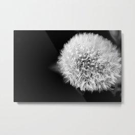 Dandelion Wishes Metal Print