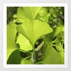 green ginkgo leaf VII Art Print