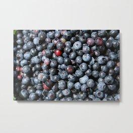 Wild Blueberries Metal Print