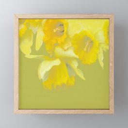 Sign of Spring - Yellow Narcissus on Spring Green Background #decor #society6 #buyart Framed Mini Art Print