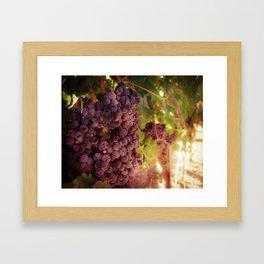 Vineyard Vines Framed Art Print