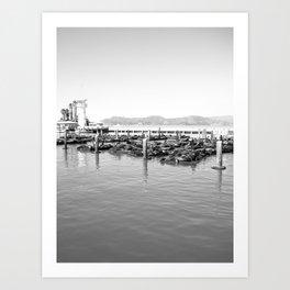 sea lions Art Print