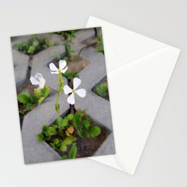 Flower in the parking lot Stationery Cards