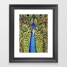 Peacock 3 Framed Art Print