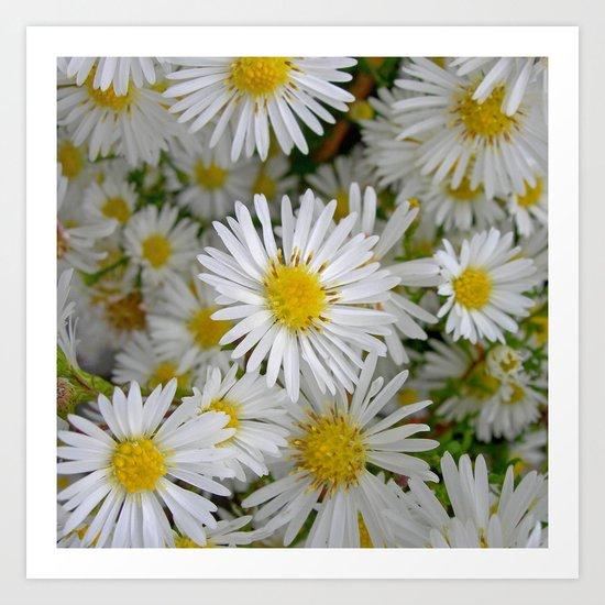 white daisy I Art Print