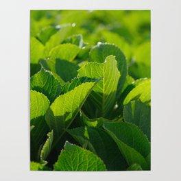 Hydrangea foliage Poster